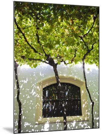 Spain, Andalucia Region, Cadiz Province, Sherry Triangle Area, Jerez De La Frontera, Bodegas Gonzal-Walter Bibikow-Mounted Photographic Print