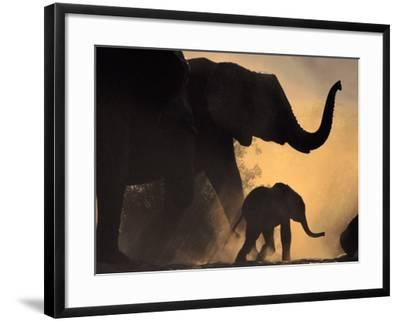 African Elephant and Young, Chobe National Park, Botswana-Frans Lanting-Framed Photographic Print