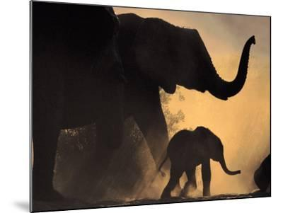 African Elephant and Young, Chobe National Park, Botswana-Frans Lanting-Mounted Photographic Print