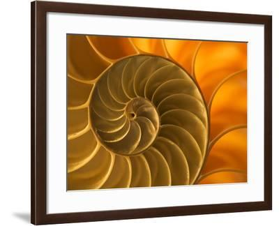 Nautilus Shell, South Pacific Ocean-Frans Lanting-Framed Photographic Print