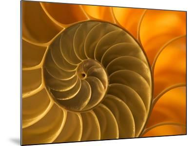 Nautilus Shell, South Pacific Ocean-Frans Lanting-Mounted Photographic Print