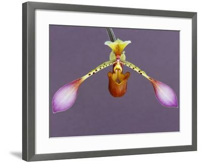Orchid-Frans Lanting-Framed Photographic Print