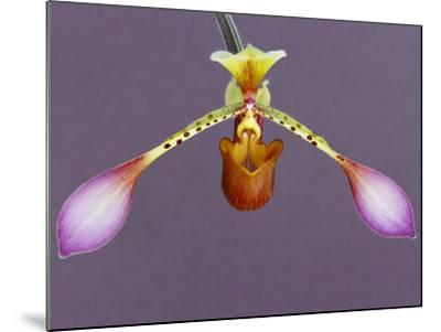 Orchid-Frans Lanting-Mounted Photographic Print