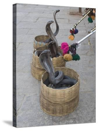 Snake Charmers Baskets Containing Cobras, Jaipur, India-Hal Beral-Stretched Canvas Print