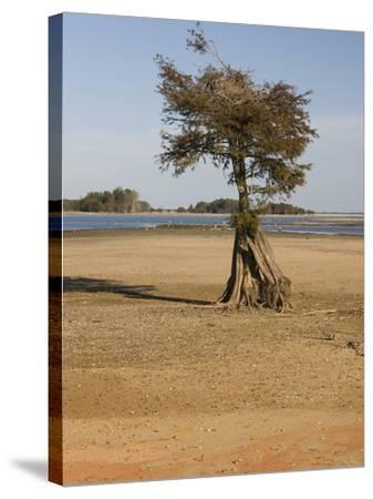 Dry Lake Bed of Lake Marion in the Santee Cooper Lake System During the Fall Drought of 2009-Marc Epstein-Stretched Canvas Print