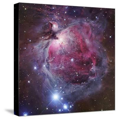 M42, the Great Nebula in Orion-Robert Gendler-Stretched Canvas Print