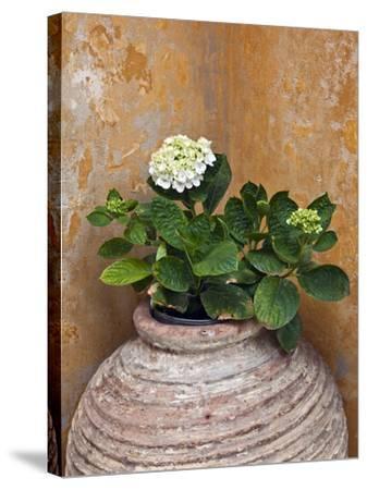 Flower in Pot, Crete, Greece-Adam Jones-Stretched Canvas Print