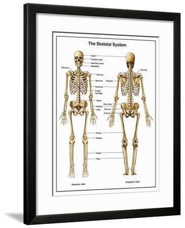 Full-Body Anterior and Posterior Anatomy of the Human Skeletal System-Nucleus Medical Art-Framed Giclee Print