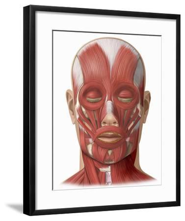 Illustration of the Human Face Muscles Showing the Following: Frontalis, Orbicularis Oculi-Nucleus Medical Art-Framed Giclee Print
