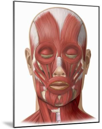 Illustration of the Human Face Muscles Showing the Following: Frontalis, Orbicularis Oculi-Nucleus Medical Art-Mounted Giclee Print