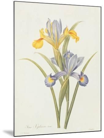 Iris (Colour Engraving)-Pierre-Joseph Redout?-Mounted Giclee Print
