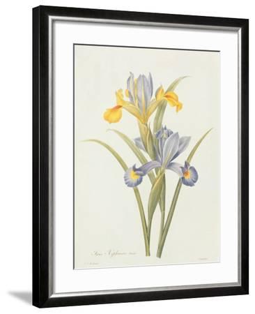 Iris (Colour Engraving)-Pierre-Joseph Redout?-Framed Giclee Print