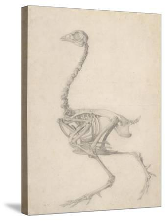 The Skeleton of a Fowl-George Stubbs-Stretched Canvas Print