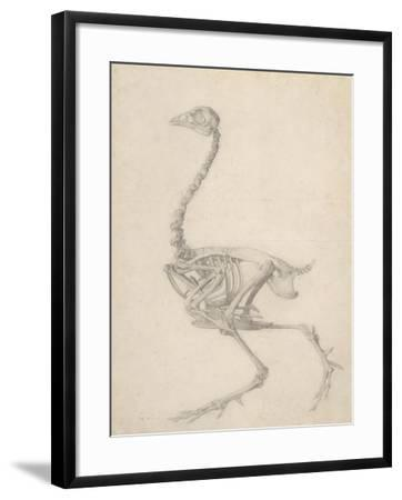 The Skeleton of a Fowl-George Stubbs-Framed Giclee Print