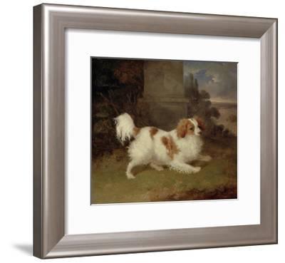 A Blenheim Spaniel, c.1820-30-William Webb-Framed Giclee Print