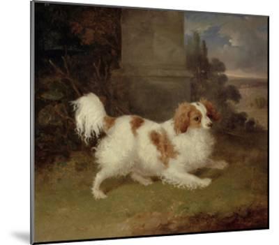 A Blenheim Spaniel, c.1820-30-William Webb-Mounted Giclee Print