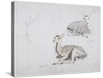 Studies of Young Pallah Deer Resting, C.1802 (W/C and Graphite on Paper)-Samuel Daniell-Stretched Canvas Print