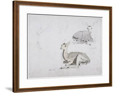 Studies of Young Pallah Deer Resting, C.1802 (W/C and Graphite on Paper)-Samuel Daniell-Framed Giclee Print