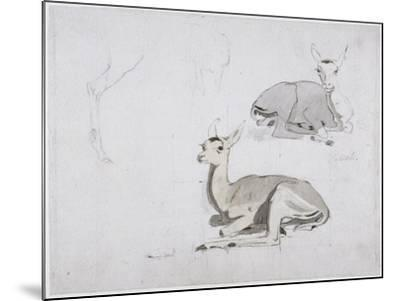 Studies of Young Pallah Deer Resting, C.1802 (W/C and Graphite on Paper)-Samuel Daniell-Mounted Giclee Print