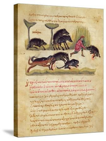 Treatise on the Boar: Life, Mating, Hunting, Illustration from the 'Cynegetica' by Oppian-Italian-Stretched Canvas Print