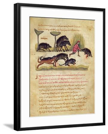 Treatise on the Boar: Life, Mating, Hunting, Illustration from the 'Cynegetica' by Oppian-Italian-Framed Giclee Print