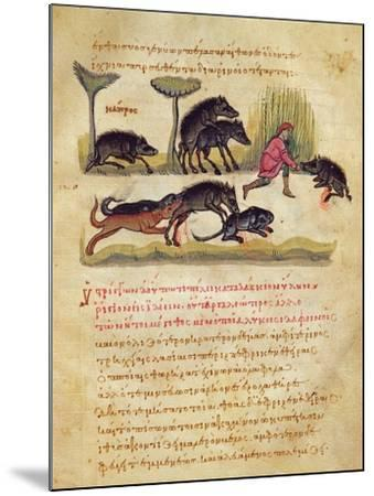 Treatise on the Boar: Life, Mating, Hunting, Illustration from the 'Cynegetica' by Oppian-Italian-Mounted Giclee Print