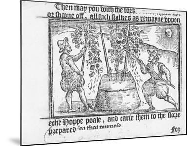 Hop Cultivation, from 'Vade Mecum, a Perfite Platform of a Hoppe Garden' by Reynolde Scot, 1576-English-Mounted Giclee Print