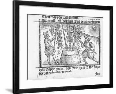 Hop Cultivation, from 'Vade Mecum, a Perfite Platform of a Hoppe Garden' by Reynolde Scot, 1576-English-Framed Giclee Print