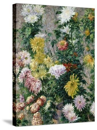 White and Yellow Chrysanthemums, 1893-Gustave Caillebotte-Stretched Canvas Print