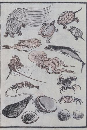 Undersea Creatures, from a Manga (Colour Woodblock Print)-Katsushika Hokusai-Stretched Canvas Print