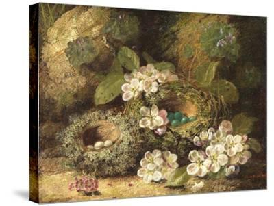 Primroses and Bird's Nests on a Mossy Bank, 1882-Oliver Clare-Stretched Canvas Print