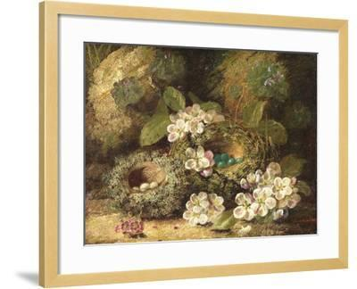 Primroses and Bird's Nests on a Mossy Bank, 1882-Oliver Clare-Framed Giclee Print