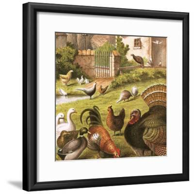 Poultry at a Farm-English-Framed Giclee Print