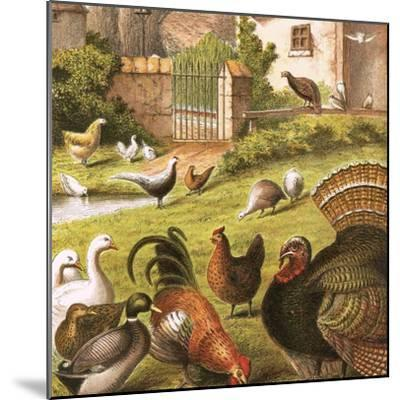 Poultry at a Farm-English-Mounted Giclee Print