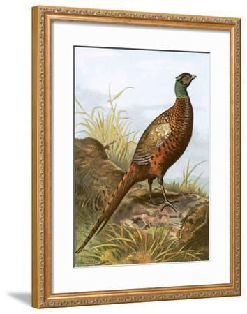 Pheasant-English-Framed Giclee Print