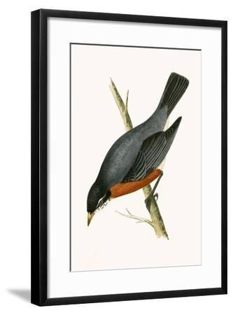 Red Breasted Thrush,  from 'A History of the Birds of Europe Not Observed in the British Isles'-English-Framed Giclee Print