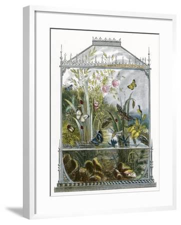 The Butterfly Vivarium-English-Framed Giclee Print