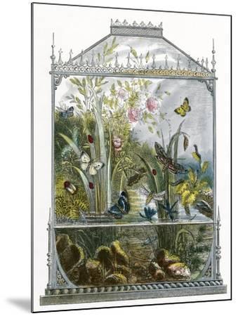 The Butterfly Vivarium-English-Mounted Giclee Print