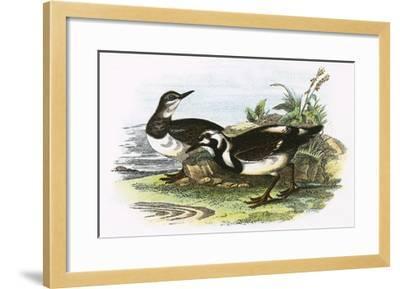 Turnstone-English-Framed Giclee Print