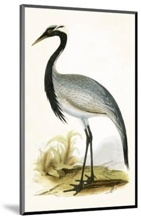 Numidian Crane,  from 'A History of the Birds of Europe Not Observed in the British Isles'-English-Mounted Premium Giclee Print