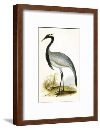 Numidian Crane,  from 'A History of the Birds of Europe Not Observed in the British Isles'-English-Framed Premium Giclee Print
