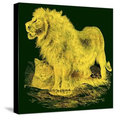 The Lion, Illustration from J. G. Wood's 'Illustrated Natural History', Published C.1850-English-Stretched Canvas Print
