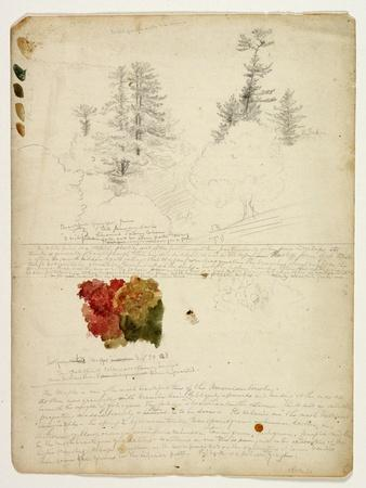 Beautiful Groups of Pines; Tints from Maples, New Hampshire, September 30th 1828-Thomas Cole-Framed Giclee Print