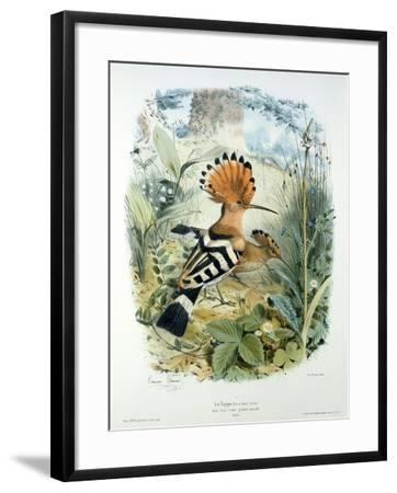 Hoopoe (Upupa Epops) (Colour Litho)-Edouard Travies-Framed Giclee Print