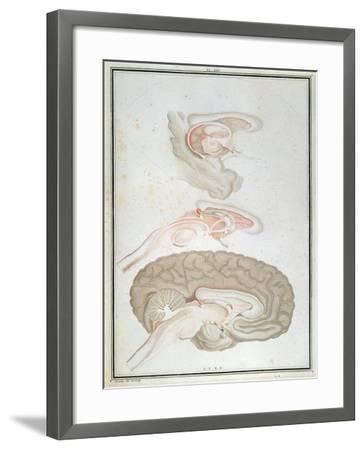 Cross-Section of the Brain, from 'Traite D'Anatomie Et De Physiologie' by Felix Vicq D'Azyr-Alexandre Briceau-Framed Giclee Print
