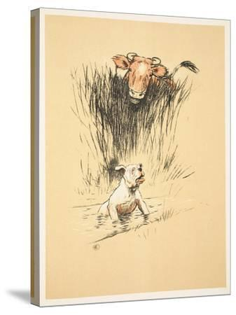 Bull and Dog in Field (Colour Litho)-Cecil Aldin-Stretched Canvas Print