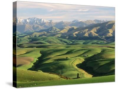 Farmland S Canterbury New Zealand--Stretched Canvas Print