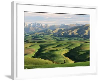 Farmland S Canterbury New Zealand--Framed Photographic Print