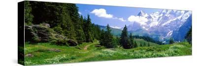 Alpine Scene Near Murren Switzerland--Stretched Canvas Print