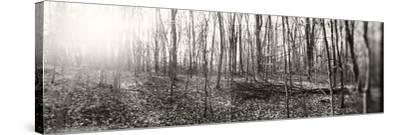 Forest, Pocono Mountains, Pennsylvania, USA--Stretched Canvas Print